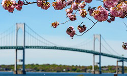 Newport, RI Pell bridge with flowers in background